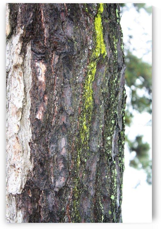Tree moss by A_B_Goddess Photography