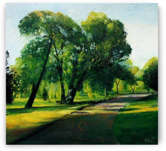 Arboretum path by Joseph Coban