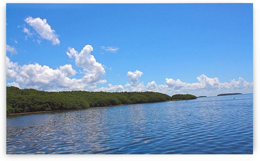 View from the airboat by A_B_Goddess Photography