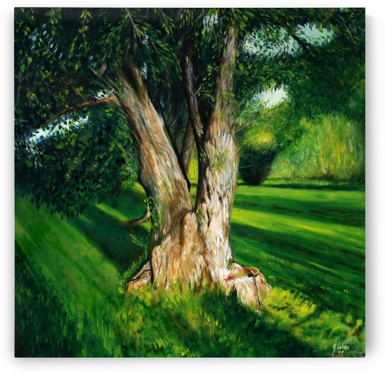 Arboretum tree by Joseph Coban