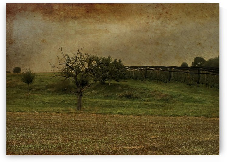R.I.P. Beautiful Old Apple Tree by Swiss Art by Patrick Kobler