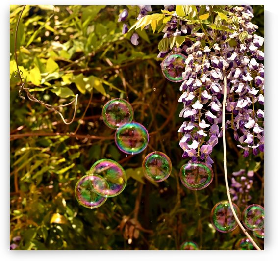 Bubbles in the Garden by H.Hart Photography