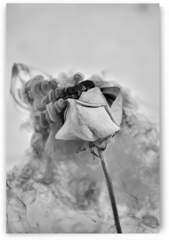 Nostalgie by Annie St-Pierre Photographie