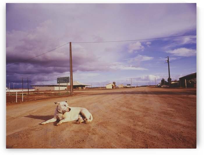 Lone dog in Outback town Australia by Downundershooter