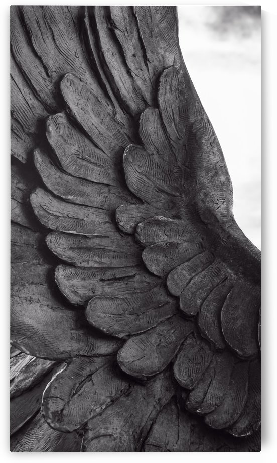 Winged Victory wing detail on mono. by Downundershooter