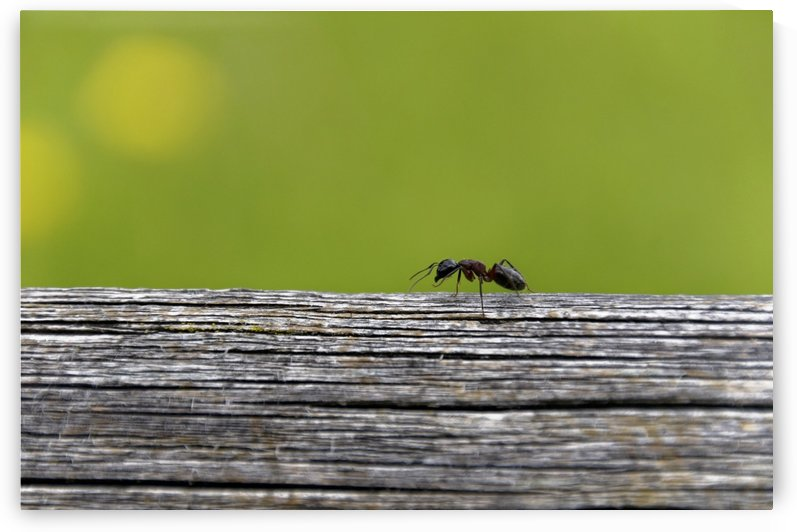 Single Ant on Highway nice green yellow Background by Swiss Art by Patrick Kobler