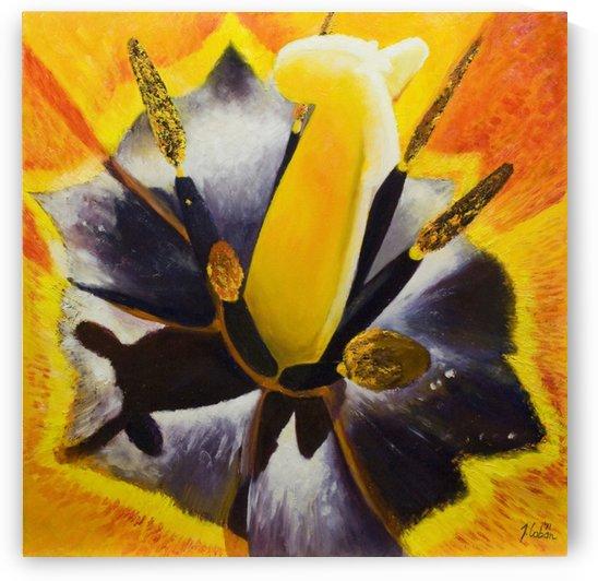 tulip glow by Joseph Coban