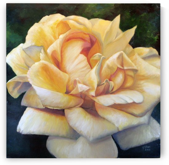 Yellow rose by Joseph Coban