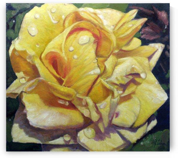 Yellow rose after rain by Joseph Coban