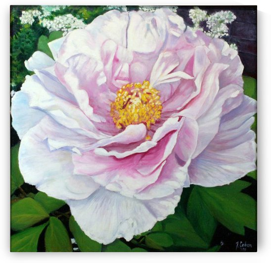 white peony by Joseph Coban