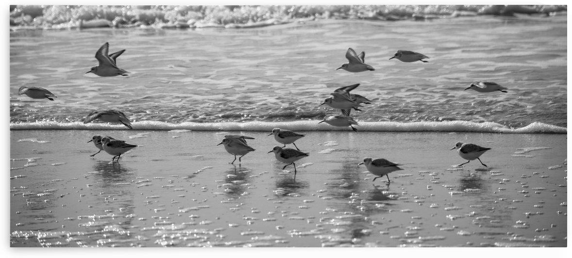 birds scattering by Keys