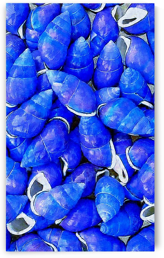 purpleshells20X12_pe by Patti Needham