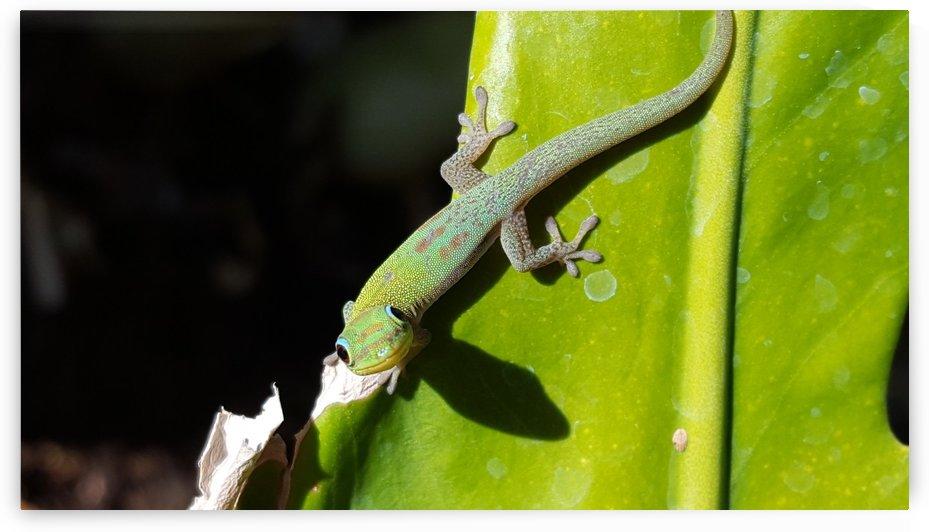 Gold Dust Gecko by Creative Endeavors - Steven Oscherwitz