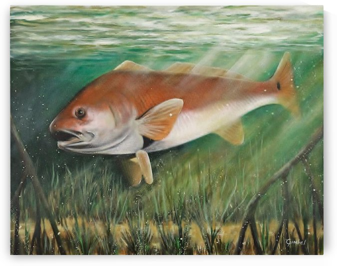 redfish by Bill Gimbel