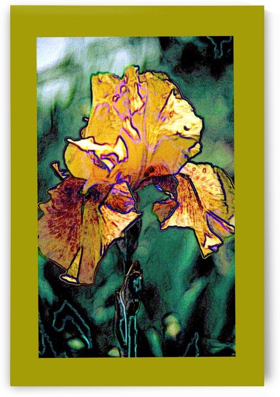 Iris Art by ImagesAsArt By John Louis Benzin