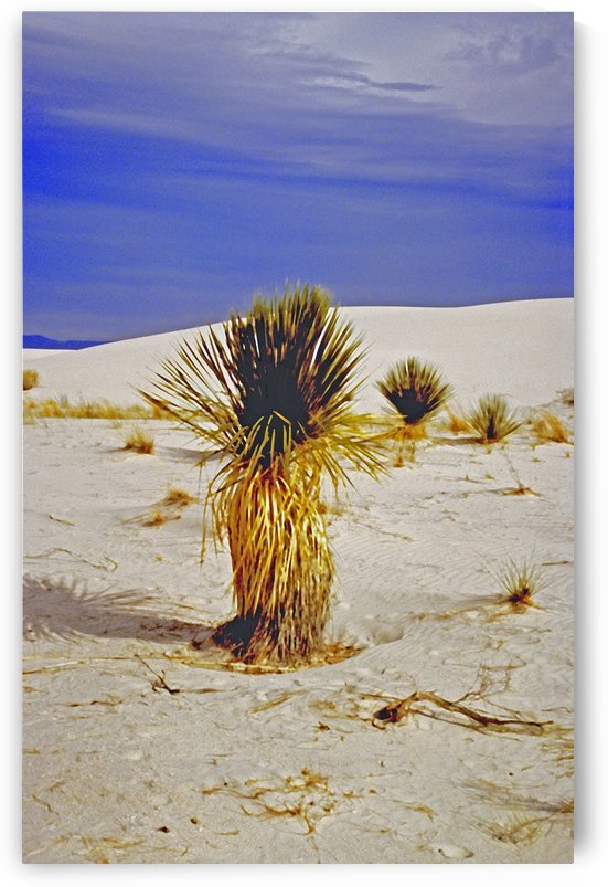 White Sands National Park Desert Cactus by ImagesAsArt By John Louis Benzin
