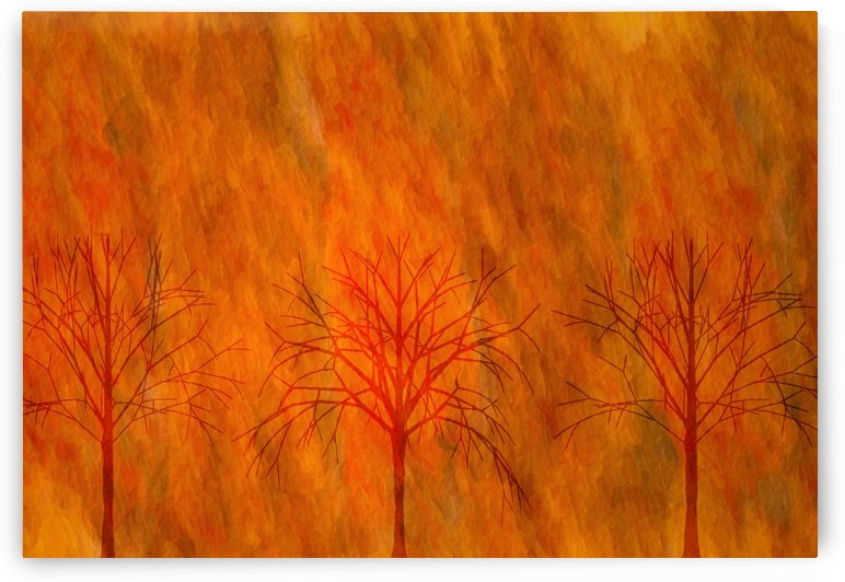 Fall Rising Bare Trees by Leslie Montgomery