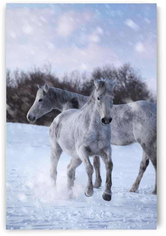 Horses in the Snow by Victor Dinh