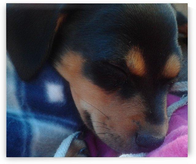 Puppy Rest my Beloved by Sindiswa Gloria