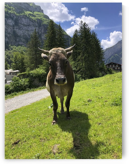 Hello my name is Rosa I am the Seealpsee Cow with Horns by Swiss Art by Patrick Kobler