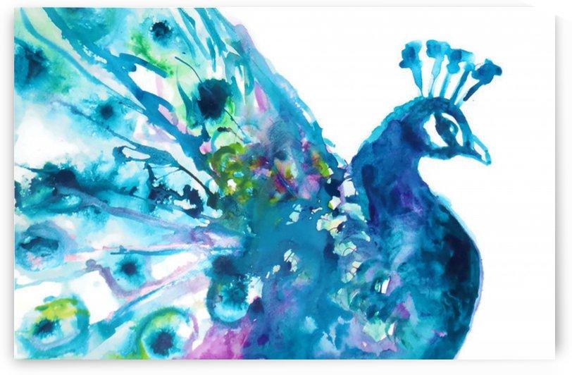 Pretty Peacock by Studio Kaufmann