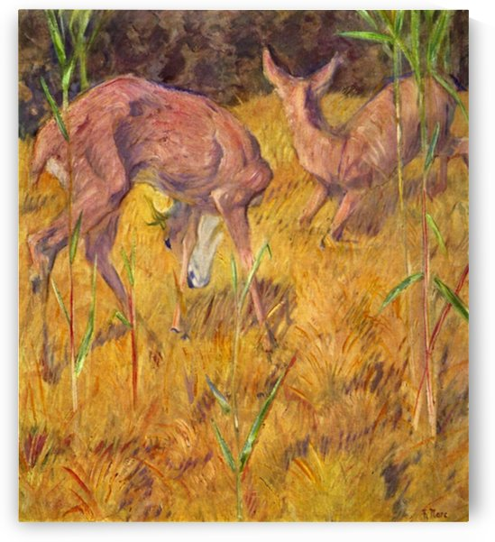 Deer in the reed by Marc by Marc