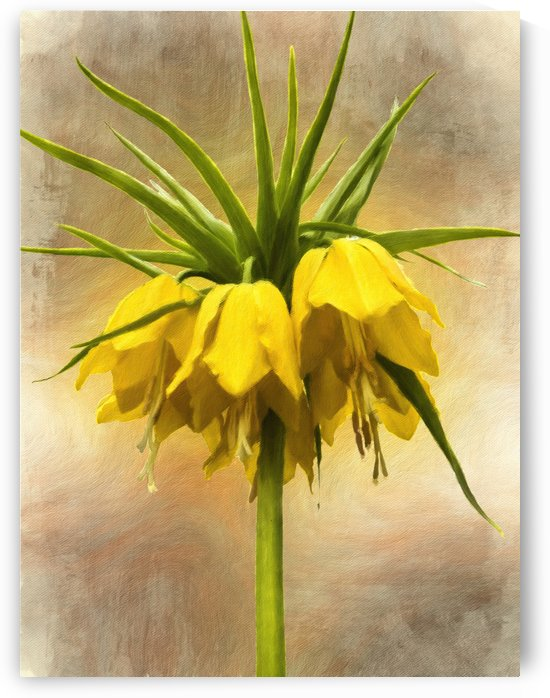 Yellow Crown Imperial Lily by Leslie Montgomery
