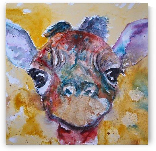 giraffe10800 by Studio Kaufmann