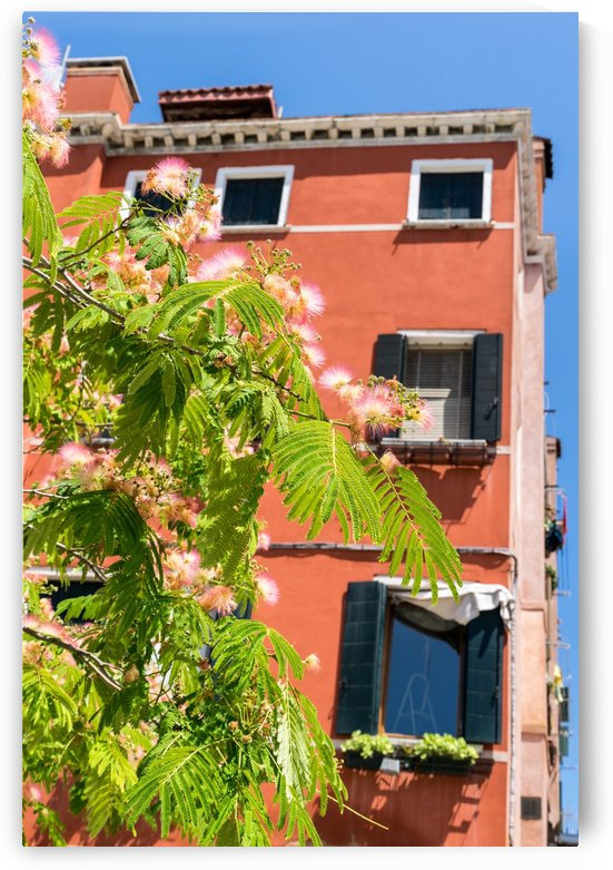 Happy Venetian - Pink Mimosa Puffs And Rich Orange Facade by GeorgiaM