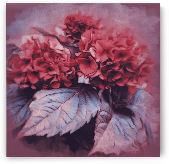 Antique Hydrangea by Leslie Montgomery