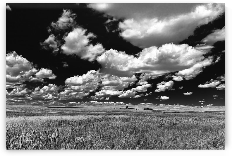 Reach Up And Touch The Clouds.BW by Garald Horst