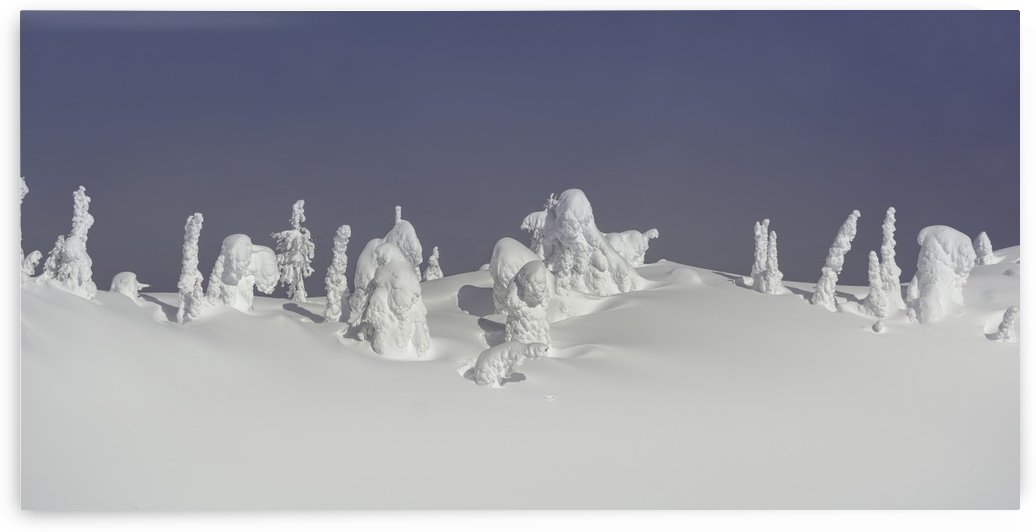 Frozen snow ghosts 1 of 1 by Billy Stevens media