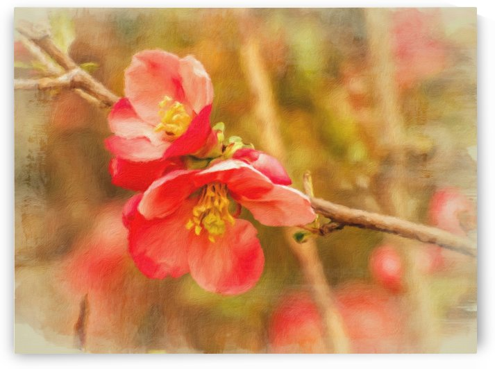 Quince Branch Horizontal by Leslie Montgomery