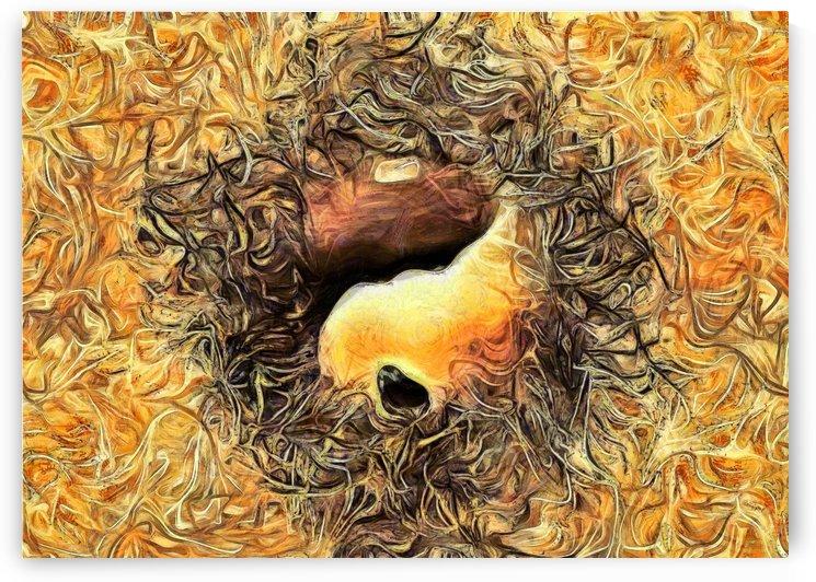 Balance by Bruce Rolff