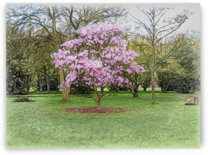 Magnolia Moments by Leslie Montgomery