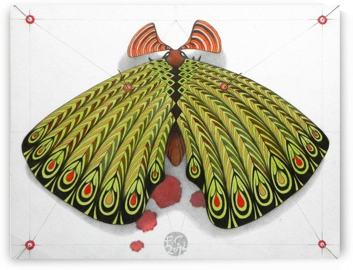 green moth by federicocortese