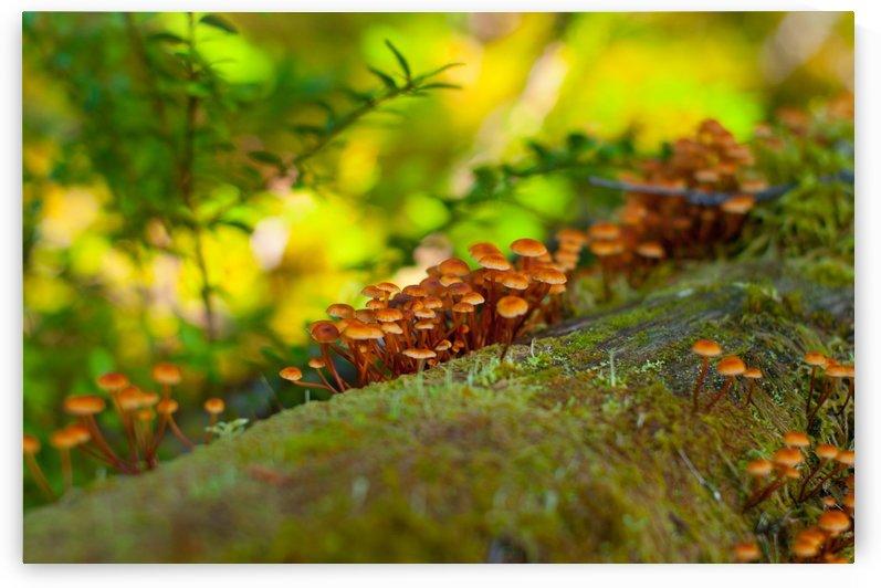 tiny mushrooms  by Sara Whelen
