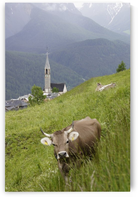 Swiss Brown Cow with Horns with Church of Sent in the Background by Swiss Art by Patrick Kobler