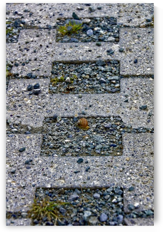 Snail on his way home colourful stone pattern by Swiss Art by Patrick Kobler