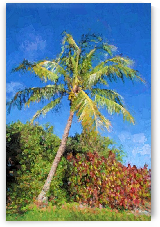 Coconut Palm Tree by HH Photography of Florida