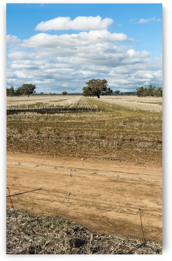 Stubble fields post harvest against blue sky and clouds. by Downundershooter