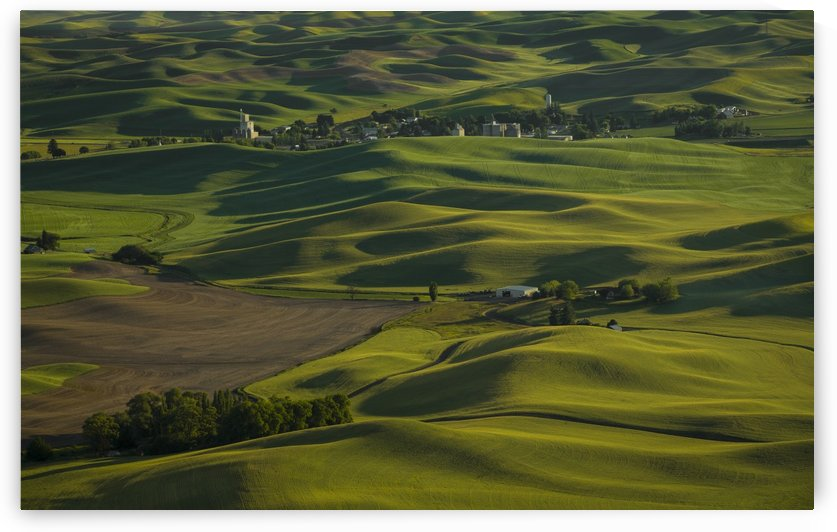 The Palouse  by John Moore
