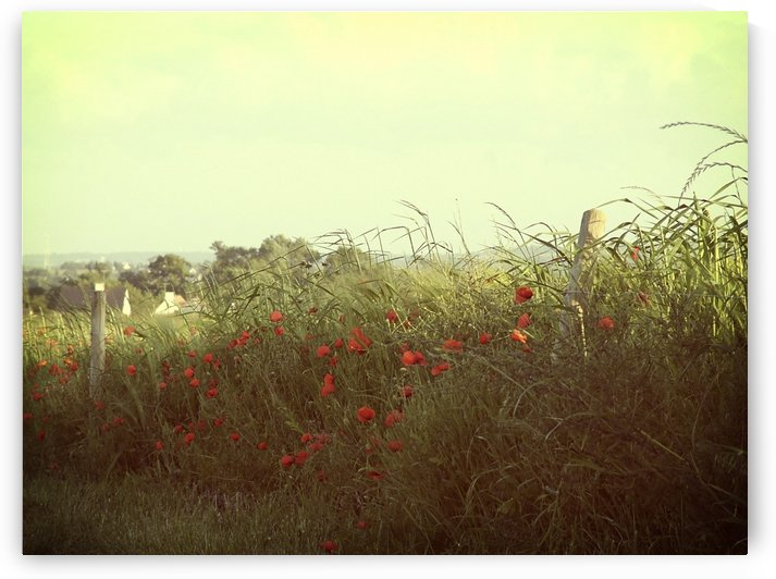 Poppies on the side of a French road. by Downundershooter