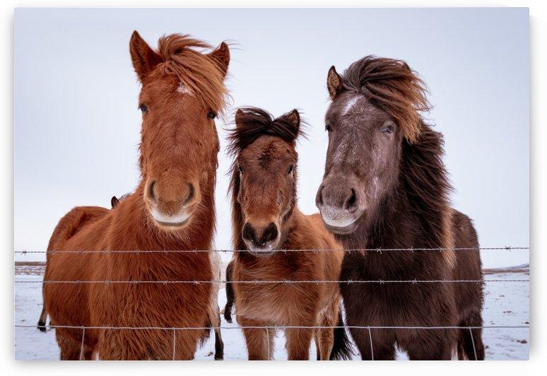 Three Amigos by Dan Fleury