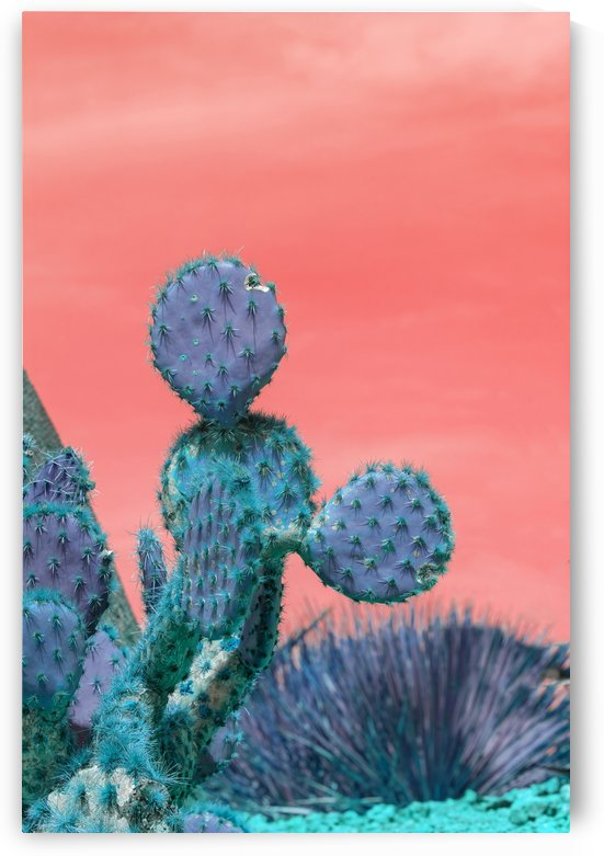 Cactus Mickey by MallorcaImages
