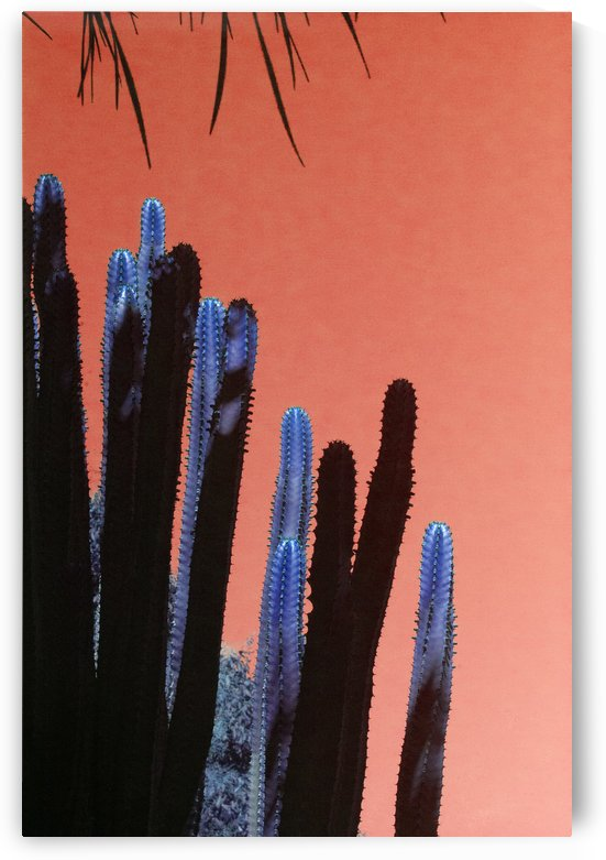 High Blue Cactus by MallorcaImages