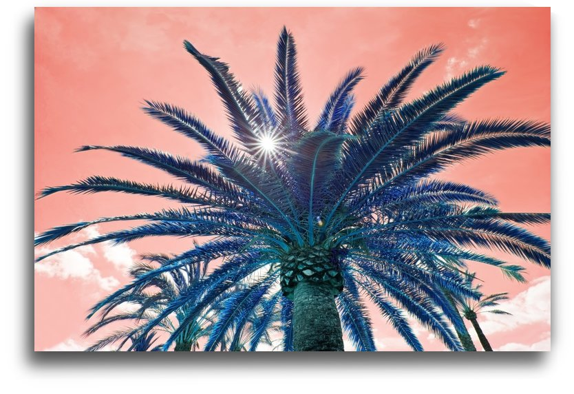 Starshine Palm by MallorcaImages