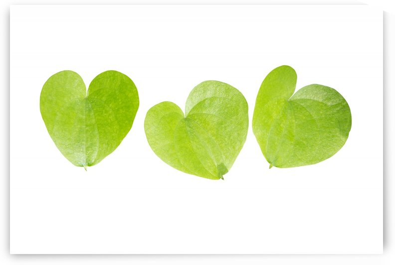 Three Hearts by MallorcaImages