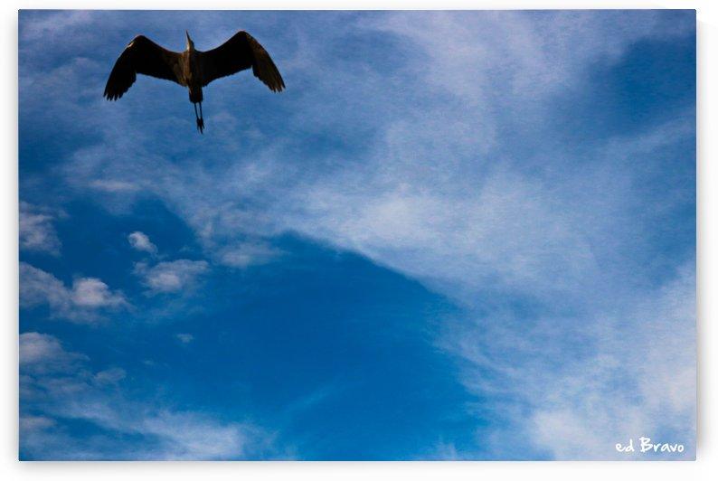 Flying high by Ed Bravo