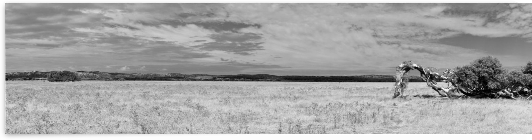 Panorama of Bended Tree Gras Dessert in B&W by Swiss Art by Patrick Kobler